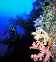 NOAA's Coral Reef Information System (CoRIS) - What are Coral Reefs