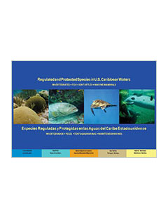 cover - Regulated and Protected Species in U.S. Caribbean Waters: Invertebrates, Fish, Sea Turtles, Marine Mammals (Version 2)