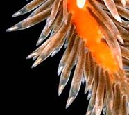 Image of sea slug