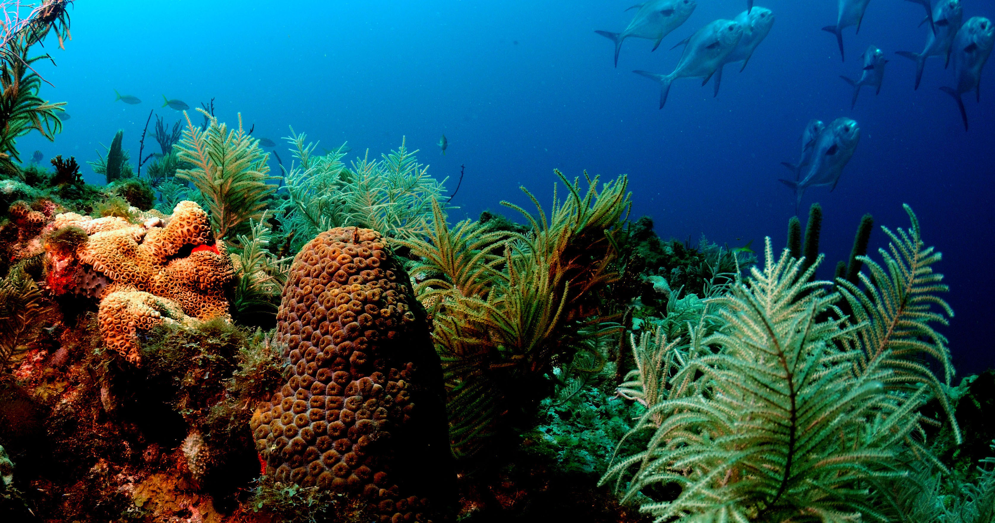 NOAA Coral Reef Information System - Glossary of Terminology