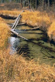 Image of stream riparian zone
