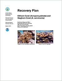 Cover for Recovery Plan for Elkhorn Coral (Acropora palmata) and Staghorn Coral (A. cervicornis)